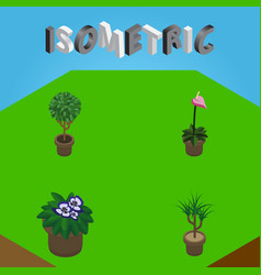 Isometric houseplant set of grower tree vector
