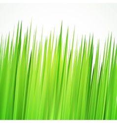 Green background frame with realistic herbs vector image