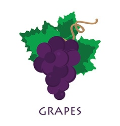 Banche of grape vector image vector image