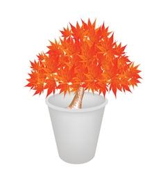 Maple bonsai in a flower pot vector