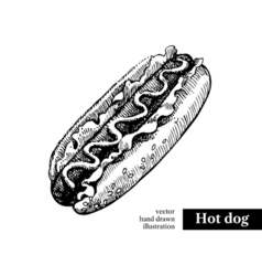 Hot dog Vintage fast food hand drawn sketch  vector image