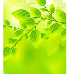 Leaves tree - blurred green vector image
