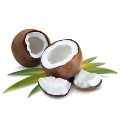 Coconut tropical vector image