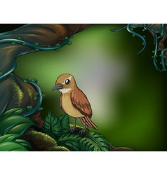 A bird at the rainforest vector image