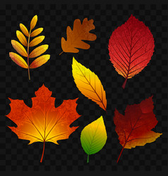 Autumn leaves - modern realistic isolated vector
