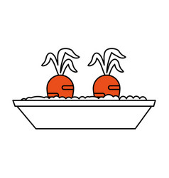 Carrots growing in pot icon image vector