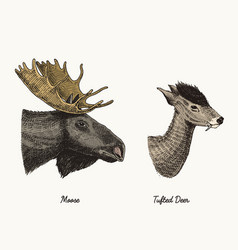 moose or eurasian elk tufted deer hand vector image vector image