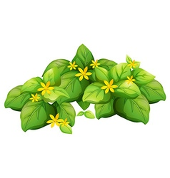 Plant with green leaves and yellow flower vector image vector image