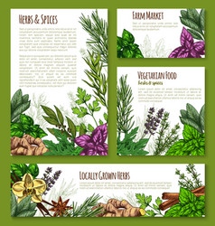 Herb spice leaf vegetable sketch banner template vector