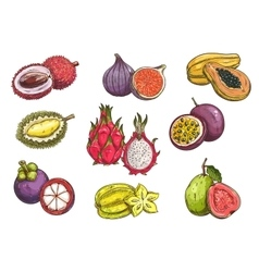 Hand drawn tropical and exotic fruits vector image