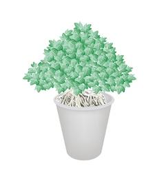 Beautiful bonsai tree in a flower vector