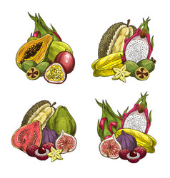 Exotic fresh tropical fruits vector