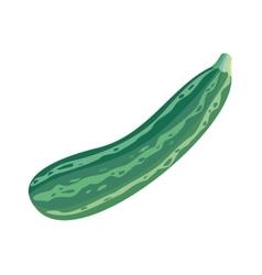Fresh vegetable marrow oblong green squash vector