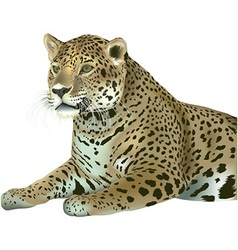 Laying leopard vector