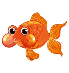 Goldfish swimming on white background vector