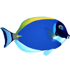 angelfish3 vector image vector image