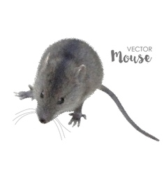 House mouse on white vector