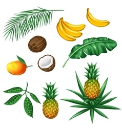 Set of tropical fruits and leaves objects for vector
