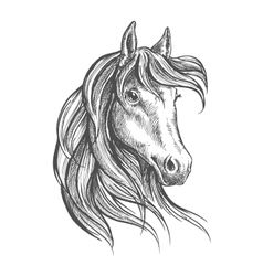 Arabian horse with long forelock sketch style vector image vector image