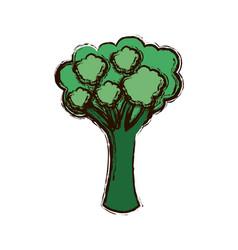 Green vegetable broccoli icon vector