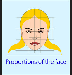 Face with lines showing facial proportions vector