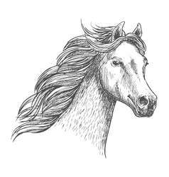White graceful horse sketch portrait vector image