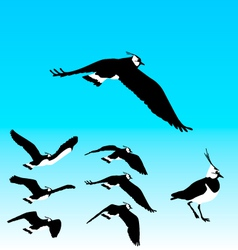 Flying Plover Sequence vector image