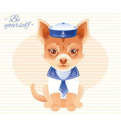 Summer fashion chihuahua puppy dog in sweet sailor vector