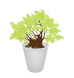 Beautiful bonsai tree in a flower vector