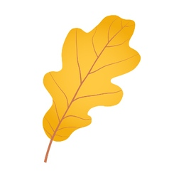 Yellow gold oak leaf as autumn symbol vector