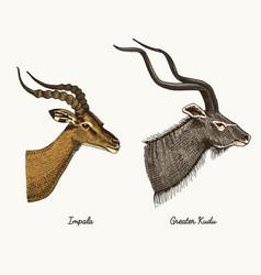 Antelopes impala and greater kudu hand vector