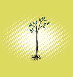 tree seedling with green leaves vector image