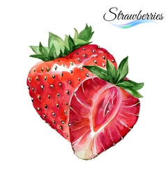 Watercolor strawberries vector