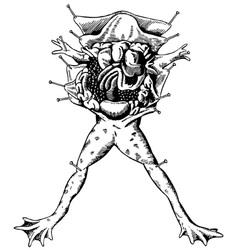 frog autopsy vector image