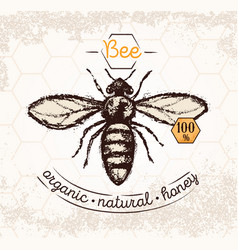 bee hand drawn on the textured background and vector image vector image