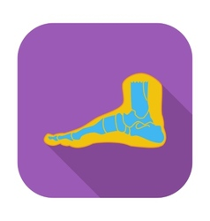 Foot anatomy icon vector