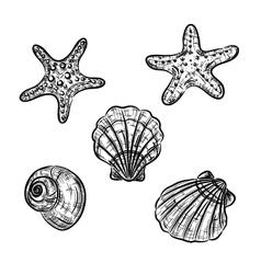 Aquatic fauna drawing vector