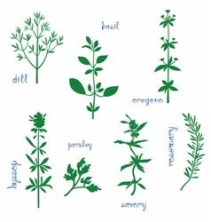 Aromatic herbs vector