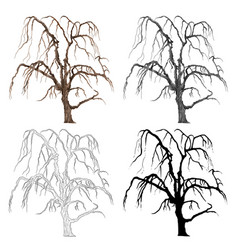 old tree willow color black and white vector image vector image