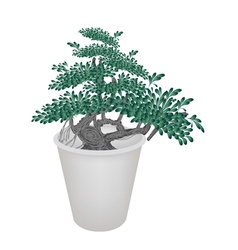 Small banyan tree in flower pot vector