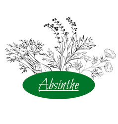 Absinthe ingredients grand wormwood green anise vector