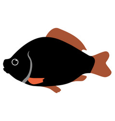 crucian vector image