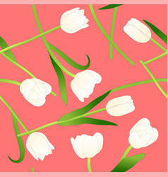 White tulip on pink background vector