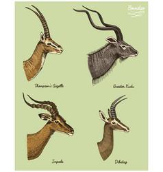 Antelopes greater kudu gazelle thompsons dibatag vector