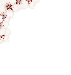 border made in sakura flowers blossom vector image
