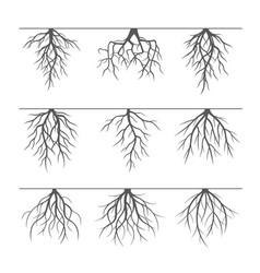 collection of grey roots vector image vector image