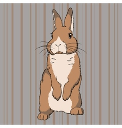 Fluffy brown standing rabbit vector