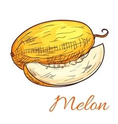Melon color sketch icon vector