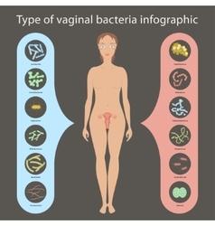 Womans vaginal flora vector image