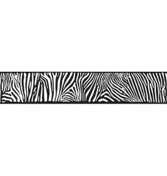 Background with zebra skin vector